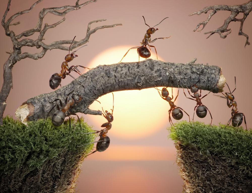 technique des fourmis formation